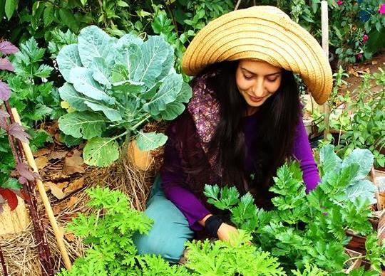 Formato das mandalas na horta promete economizar água e trabalhar com a diversidade de plantas