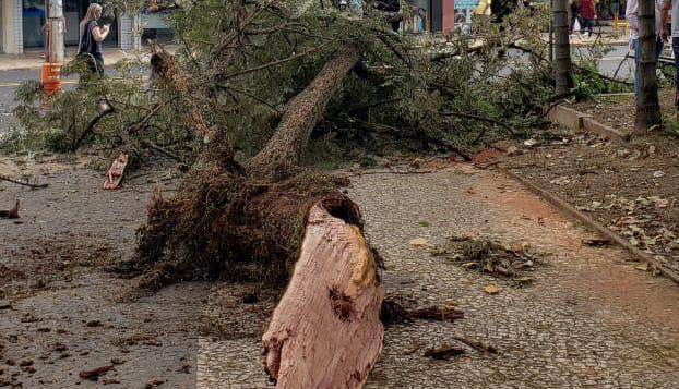 Na queda da árvore, um veículo foi atingido pelos galhos