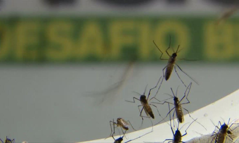 Maior incidência da doença permanece na zona leste, com 847 confirmações