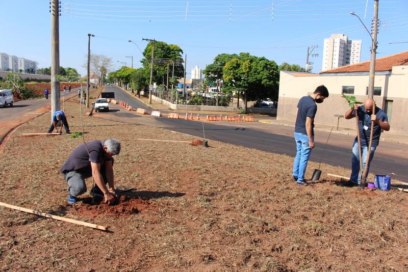 Foram plantadas mudas de Palmeiras, Ipês, Quaresmeiras, Jacarandá e Pata de Vaca
