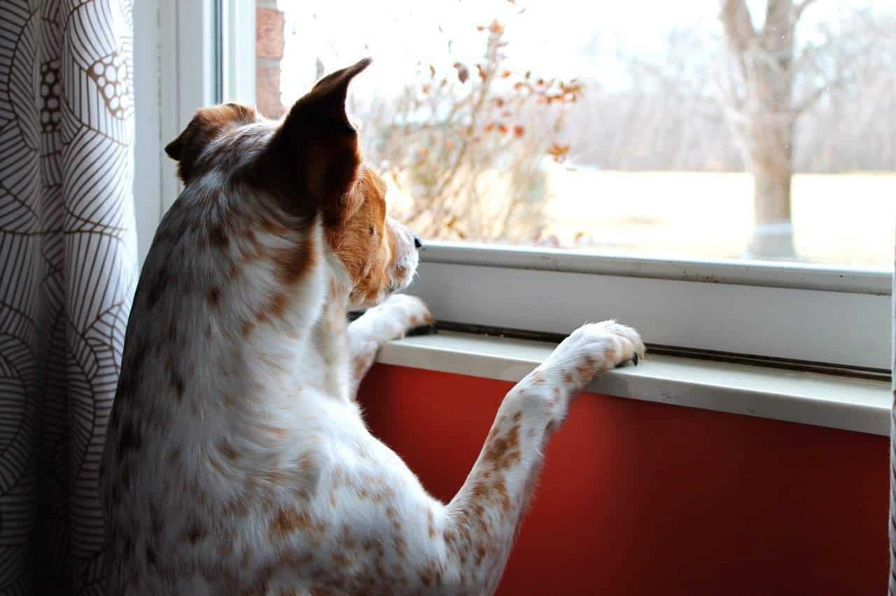 Passar muito tempo longe do seu cachorro de estimação pode até ser necessário, já que o trabalho exige isso, mas essa atitude também pode deixar o seu cão com muita saudade